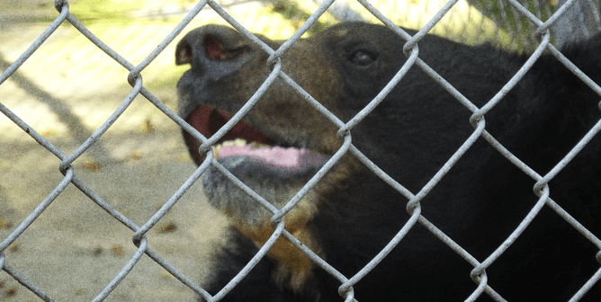 Dillan Was Rescued 6 Months Ago—It's Time His Abusers Were Charged