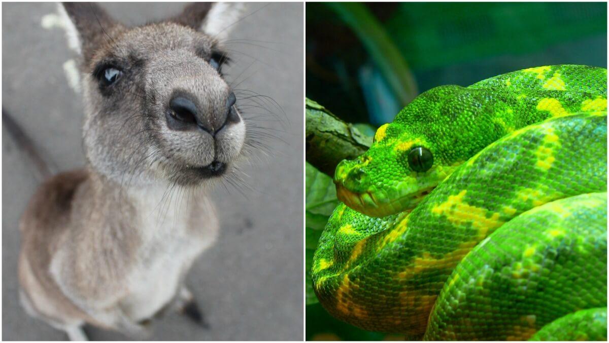 Versace Exotic Skins Kangaroo Leather and Tree Python