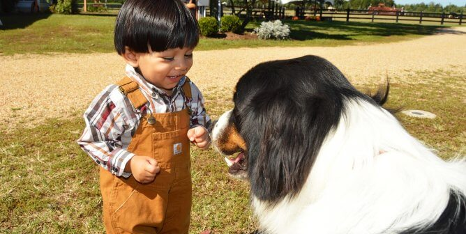 'Meeting the Needs of Companion Animals' Lesson