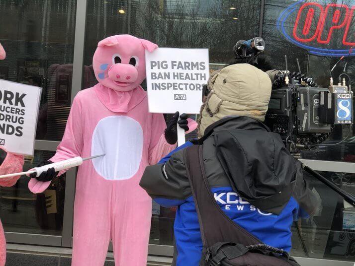 peta demo des moines pigs protest pork industry after 60 minutes segment