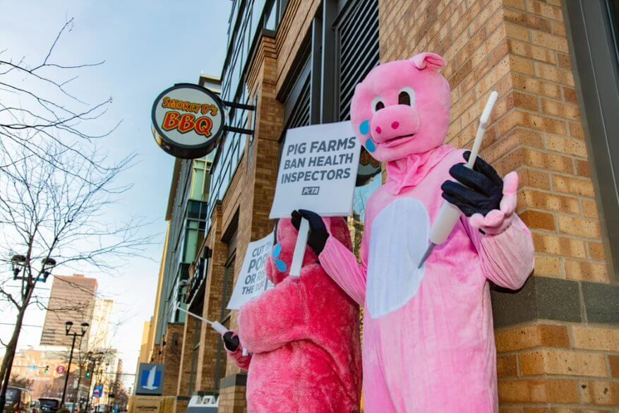 costumed pigs protest pork in des moines with prop syringes