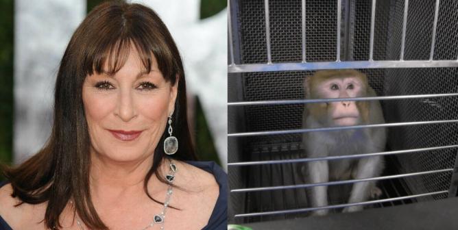 Anjelica Huston Joins PETA's Call for NIH to Stop Terrifying Monkeys