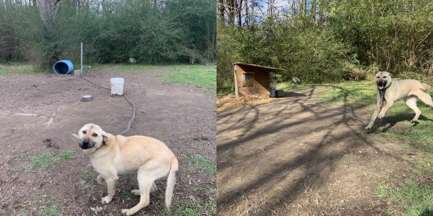 Before and After photos of Devo with new free PETA doghouse