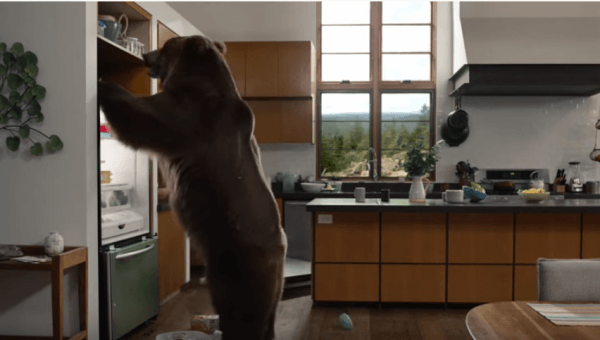 Urge GEICO to Drop Cruel Bear Ad
