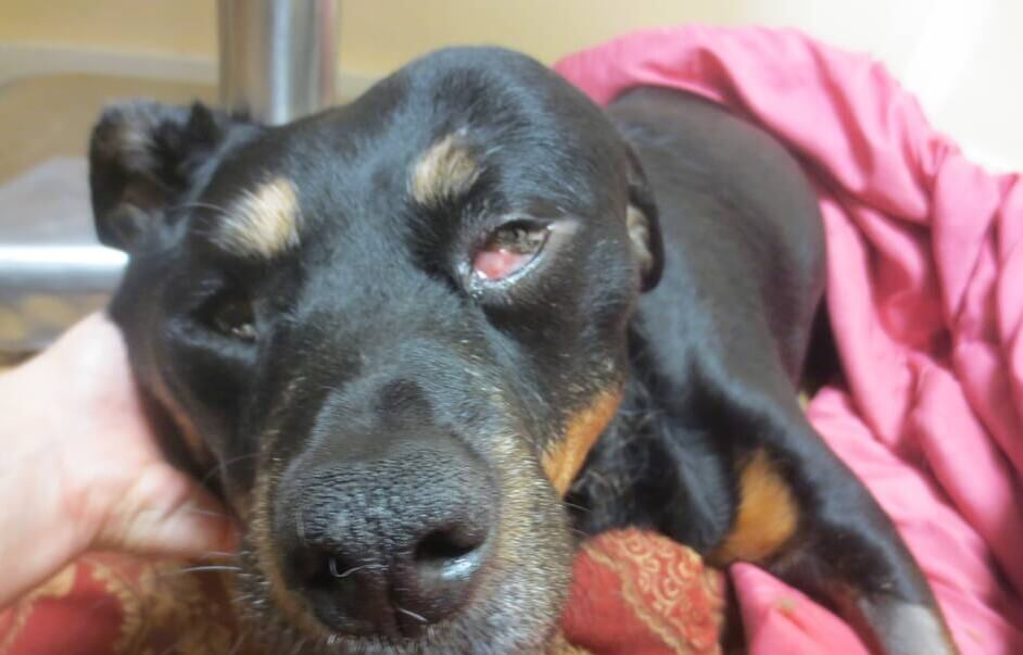 Sadie Mae, a dog brought to PETA for end-of-life services