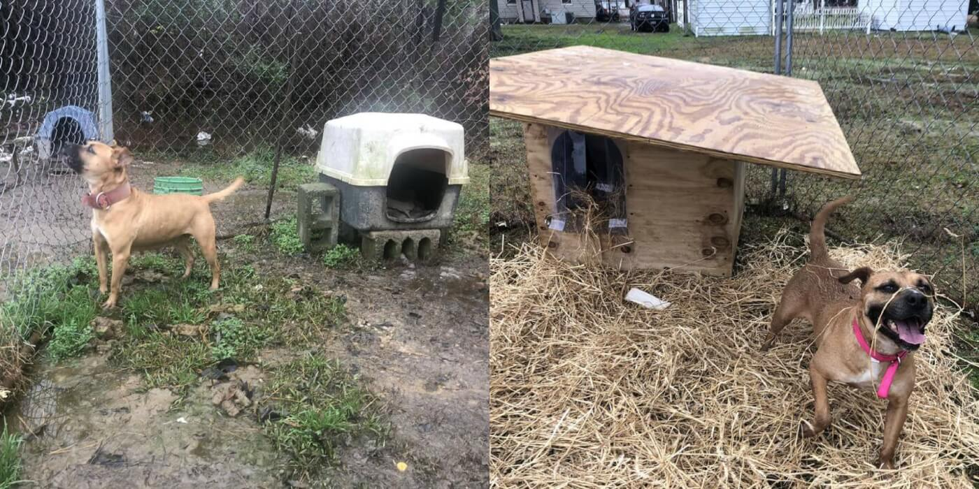Before and After photos of Sheba, a dog given a new free doghouse by PETA