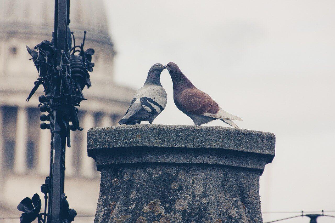 Love Birds, animal love