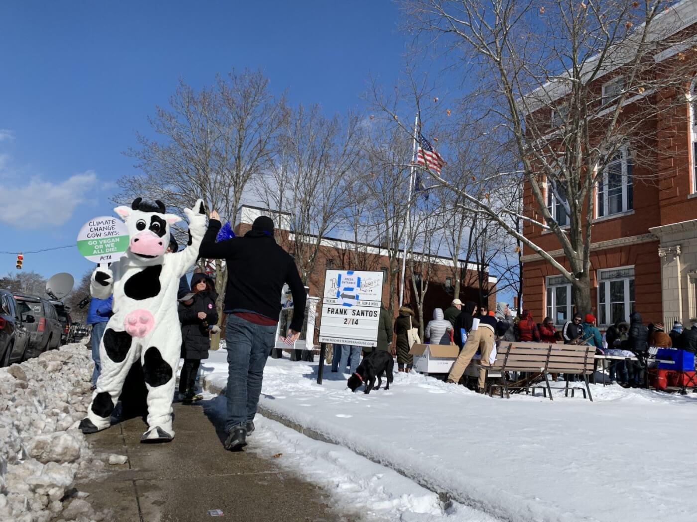 peta climate change cow new hampshire primary