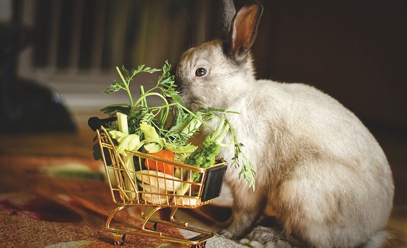 A siamese-colored rabbit sniffs produce that is in a tiny, rabbit-sized shipping cart