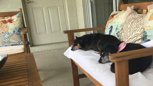 PETA Rescue Capone Adopted and Adored