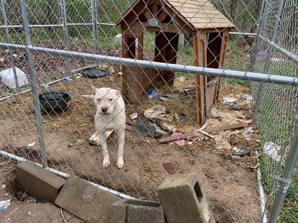Casper the dog and an old dog house
