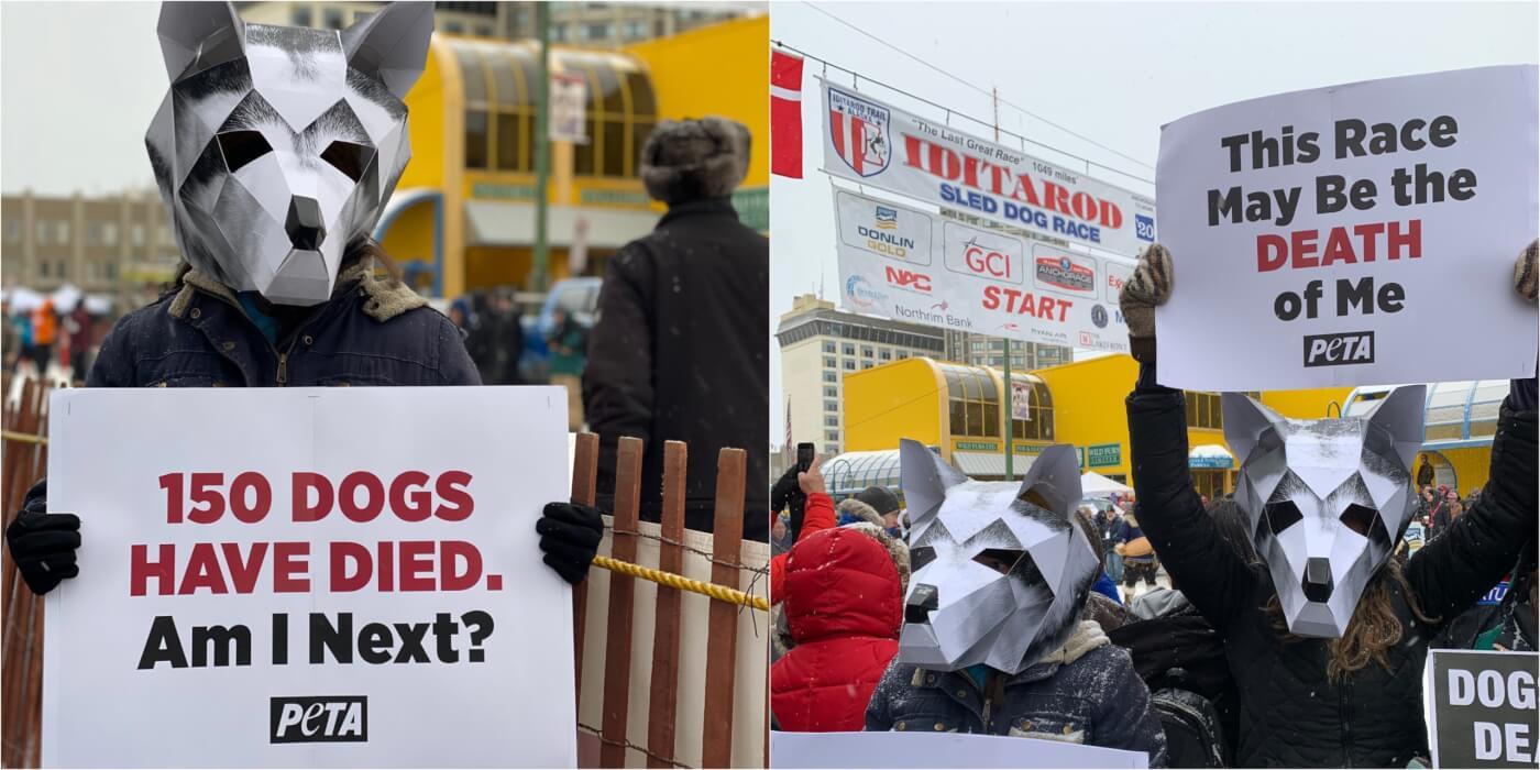 iditarod 2020 PETA protest