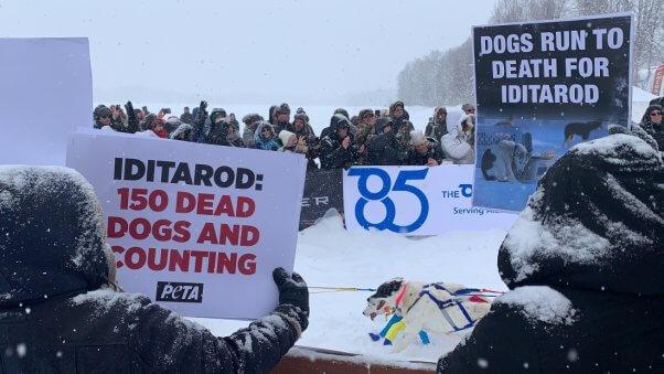 Iditarod photo