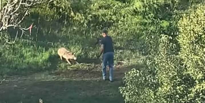GRAPHIC: Man Repeatedly Shoots Trapped, Writhing Coyote in the Head