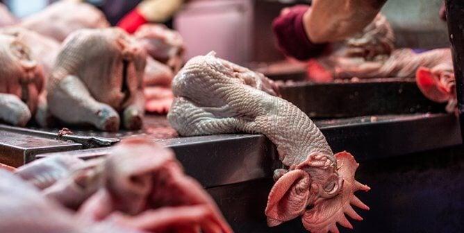 PETA Rapid Action: Urge Officials to Close Live-Animal Markets NOW