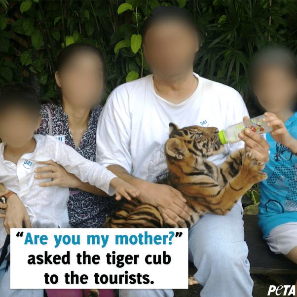 """tiger baby playtime"""