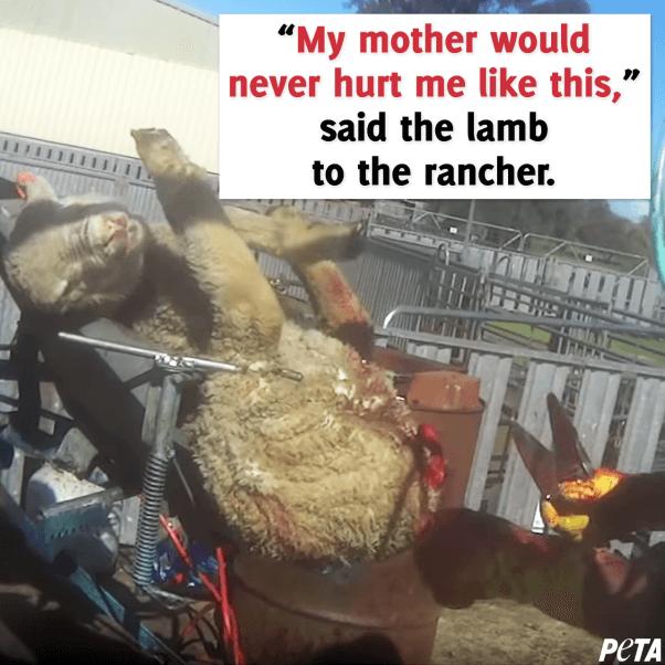 never buy wool