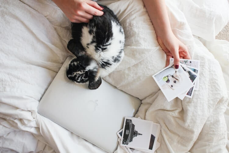 Black a white rabbit sits on bed while person holds photos