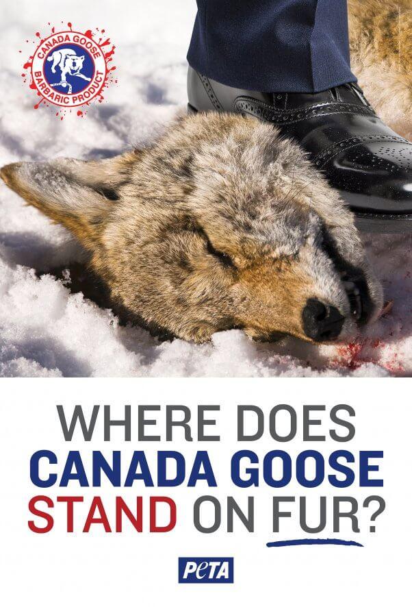 Anti Canada Goose Ad by PETA