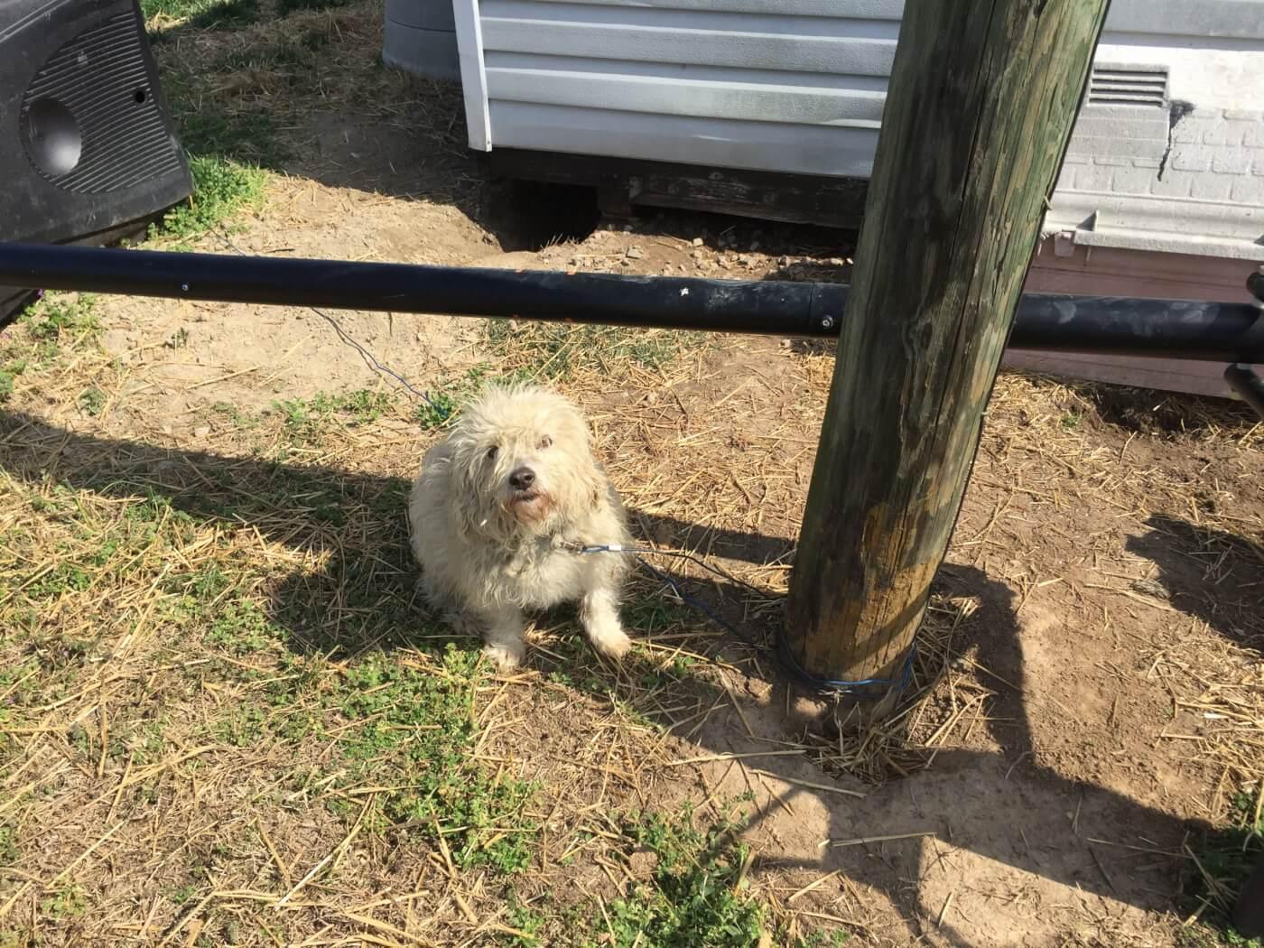 Wayne dog PETA adoptable animals