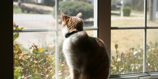 Self-Isolating? Here's How to Keep Your Dog or Cat Happy