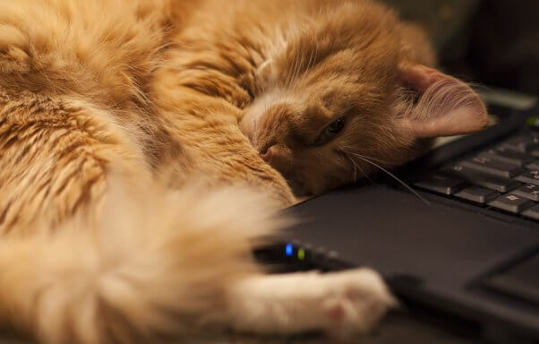 A red-haired cat curls up against a black laptop