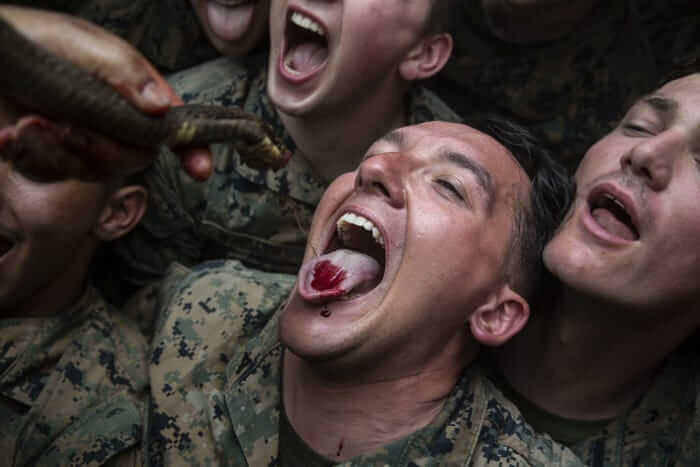 U.S. Marines Kill Cobras, Drink Their Blood for Cobra Gold 'Training'