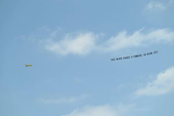 go vegan plane banner from peta flies over fort lauderdale florida