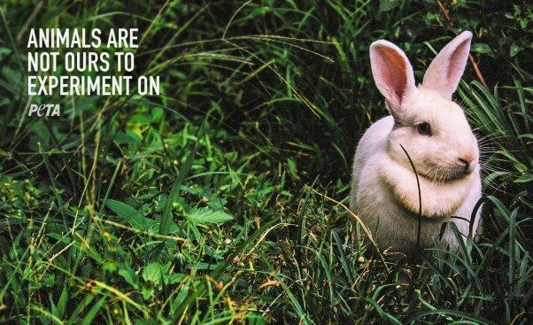 PETA Zoom Background with rabbit