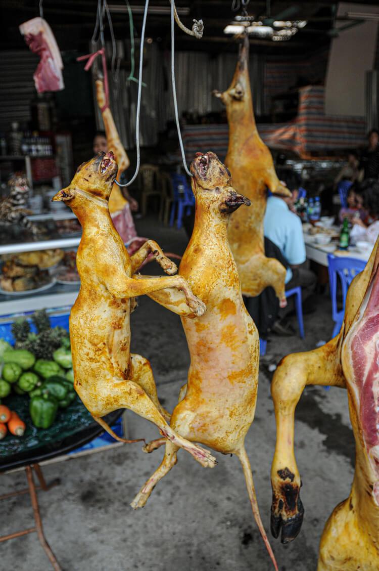 UPDATE: Dr. Fauci Wants Foreign 'Wet Markets' Shut Down | PETA