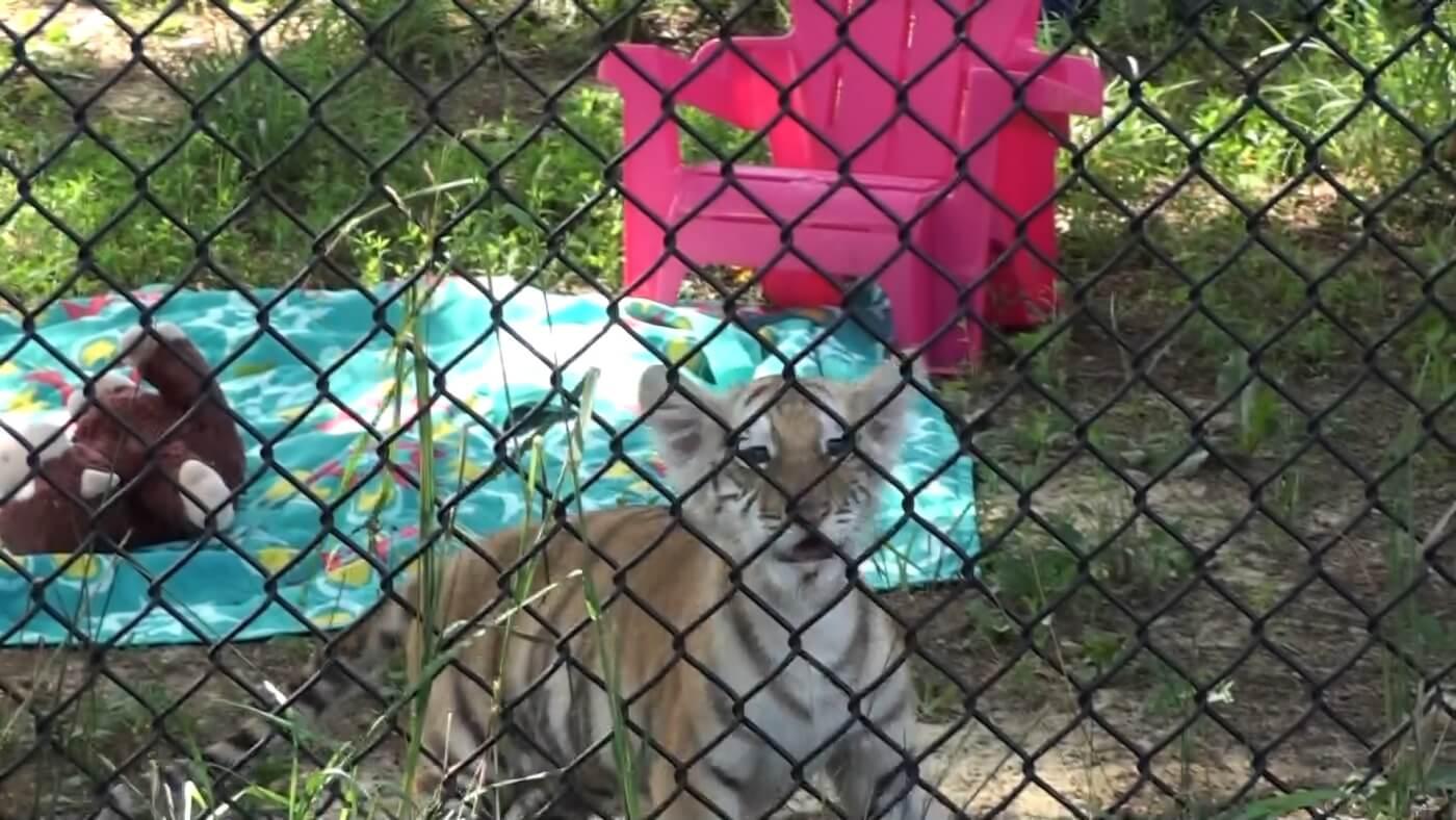 virginia bans cub-petting encounters