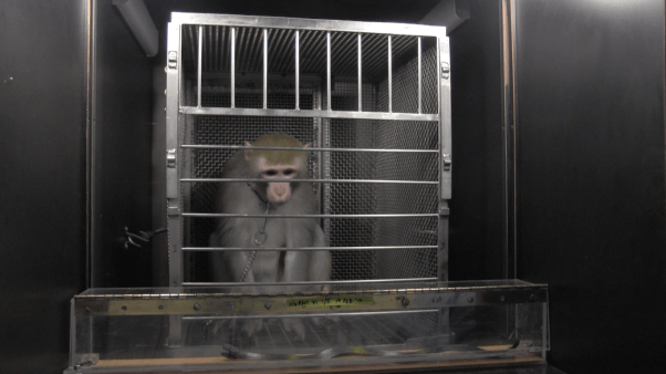 10 reasons experiments on monkeys must end