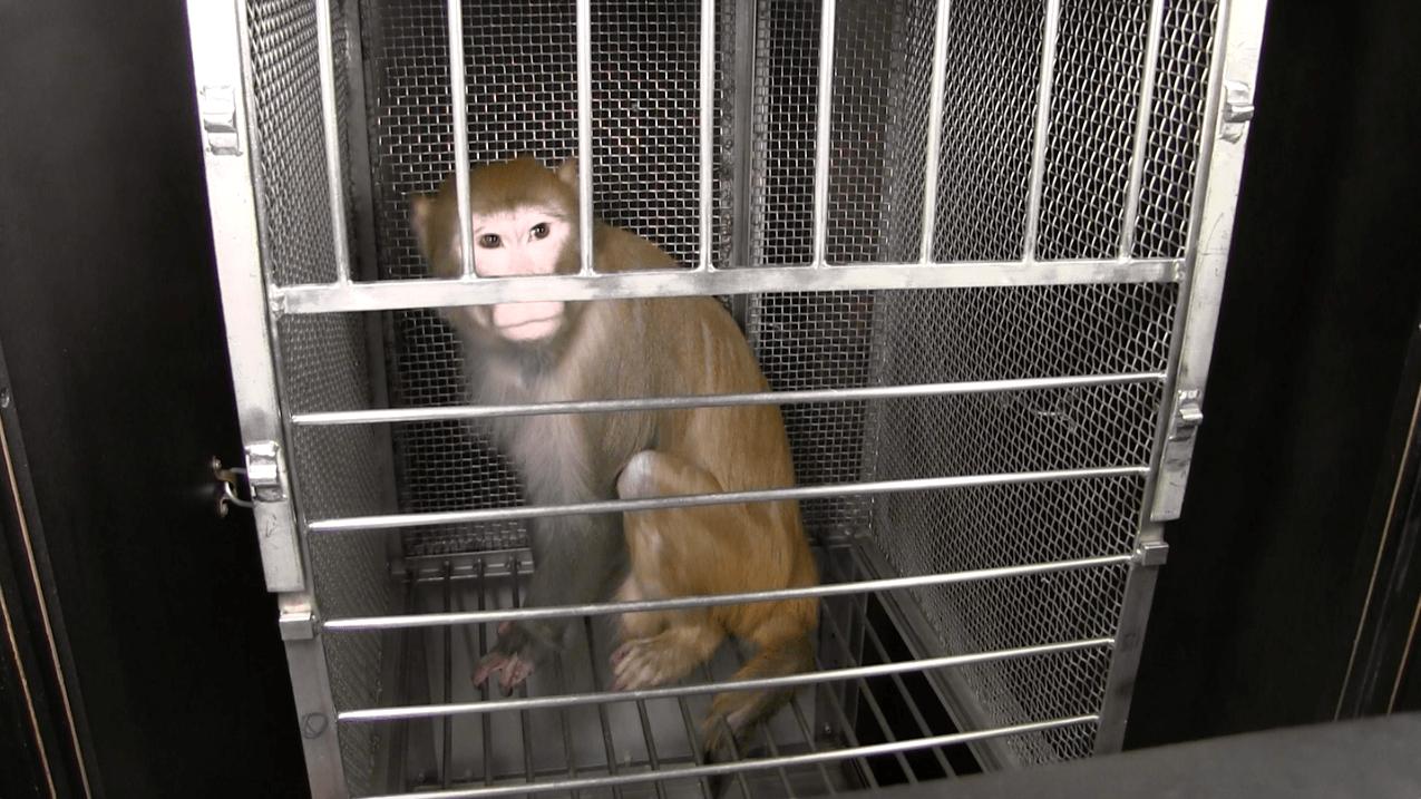 Urge Congress to Act: Shut Down Elisabeth Murray's Monkey Terror Lab