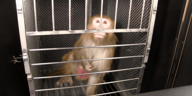 Animal Experiments Are Coal in a Solar World: Join the 21st Century!