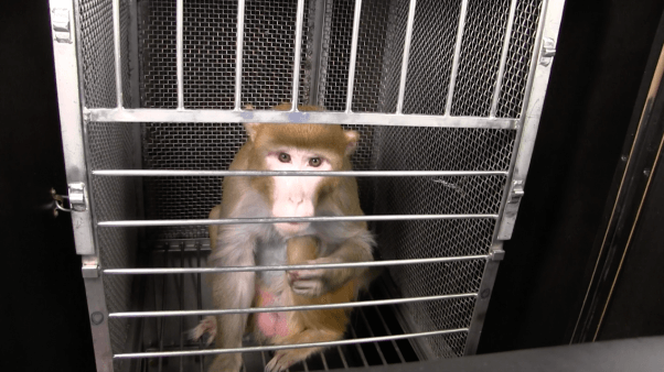 frances collins and joshua gordon receive letter from monkeys used in NIH experiments - mackeson