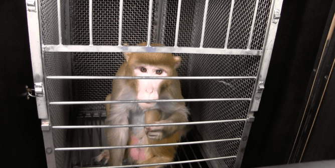 NIH Director Turns Blind Eye to Cruelty—Demand New Leadership Now