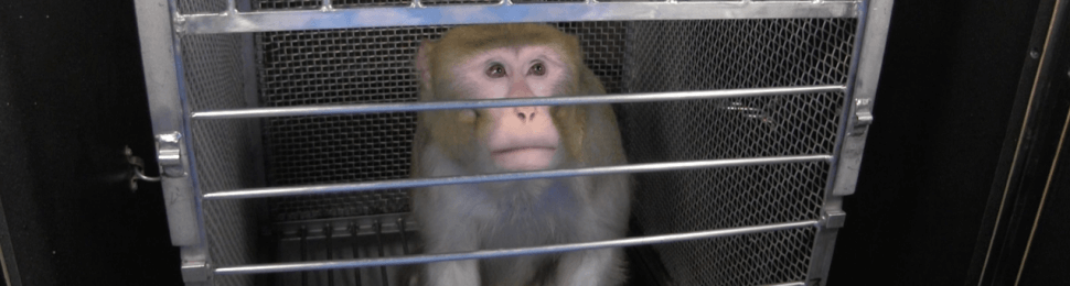 open letter from monkeys used in experiment - blofeld