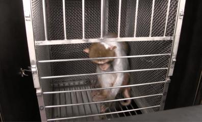 Elisabeth Murray's Cheerleaders Celebrate Her Cruel Experiments on Monkeys