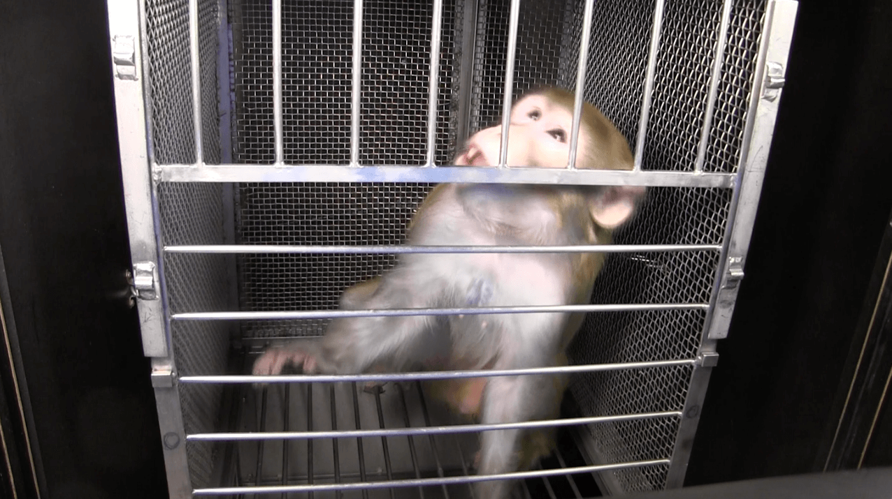 open letter from monkeys used in experiments - Gronk