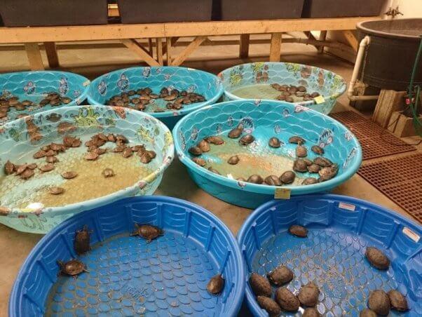 turtles supplier mill petsmart stores