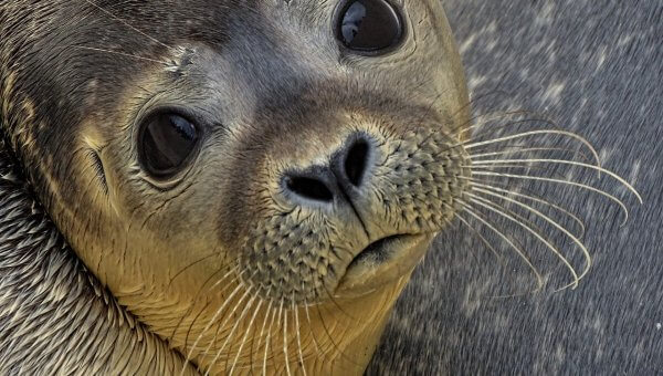 Tell the Vancouver Aquarium to Operate Solely as a Rescue and Rehab Facility