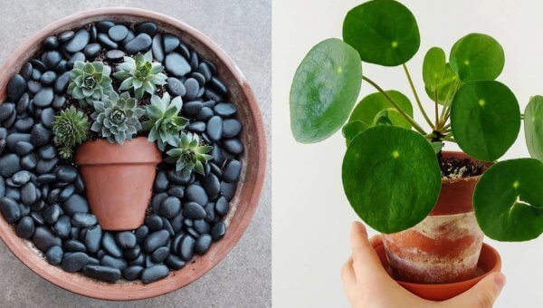 Animal-Friendly Houseplants That Will Cure Your Isolation Blues