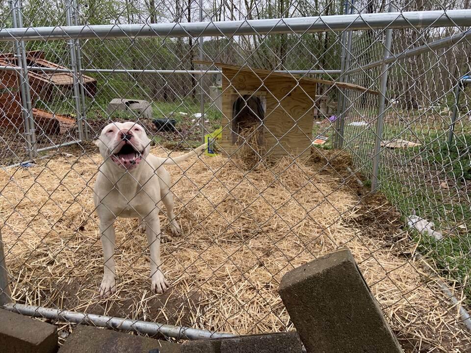 COVID-19 Hasn't Stopped PETA's Animal Services