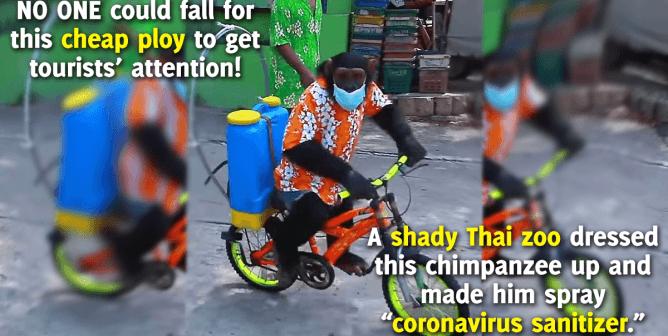 Chimpanzee Forced to Ride Bike, Spray Sanitizer at Thai Zoo