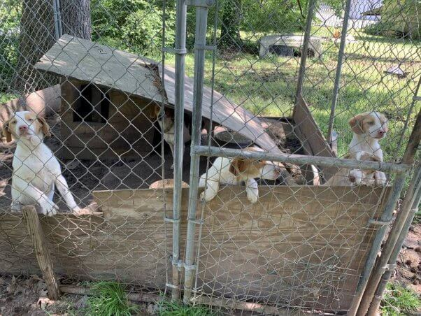 six dogs neglected in halifax county, nc