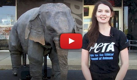 Teaching Virtually? Students Can Still Meet Ellie the Elephant