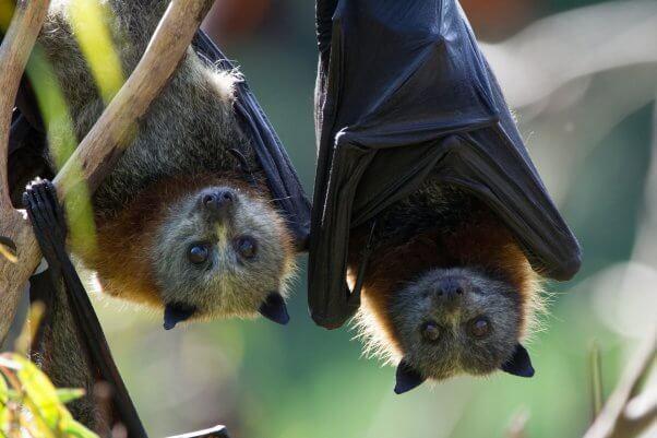 bat friendships