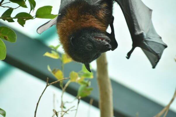 bat laughing smiling