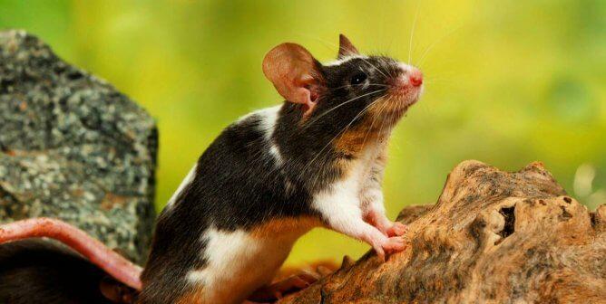 Speed Treatments, Skip Animal Testing: Support FDA Modernization Act