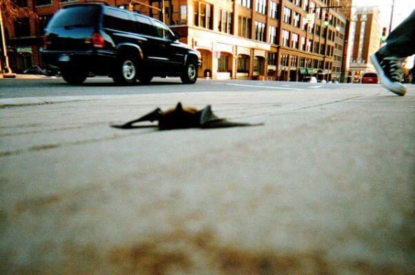 injured bat sidewalk